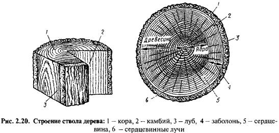 Деревина як матерія для виробництва віконних профілів