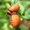 Боротьба з деревними жуками