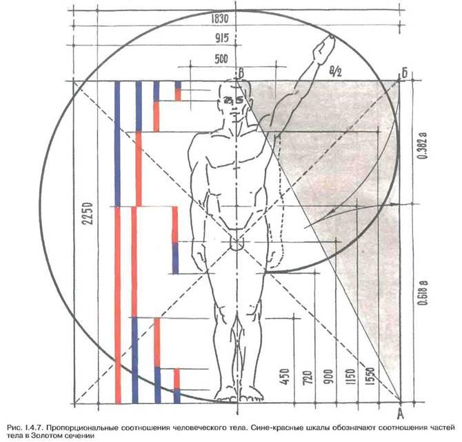 Фактори, що впливають на просторові параметри середовища проживання. Ергономіка і антропометрія